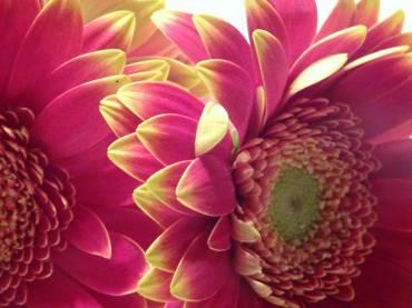Light Language – Vibrational Medicine for DNA and Cellular Repair